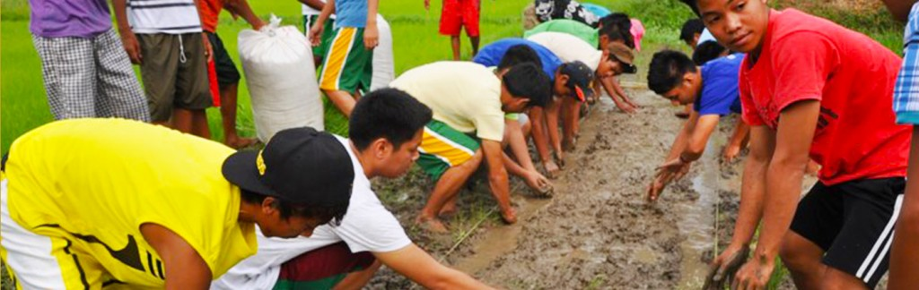 Training Program - Philippine Rice Research Institute : Philippine