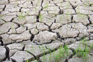 El Nino - PhilRice