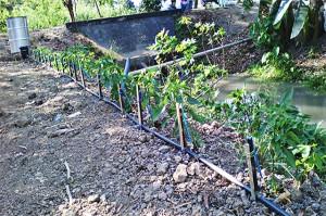 Irrigation-PhilRice