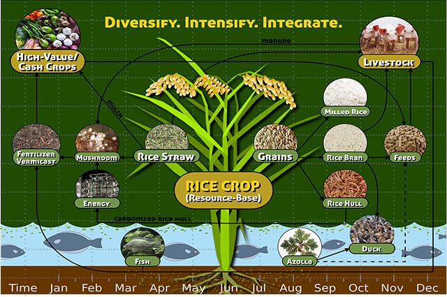 Rice-based farming
