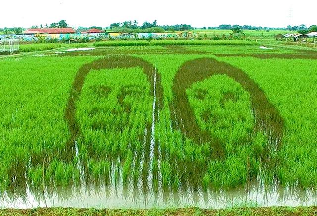 Du30-Robredo rice paddy art