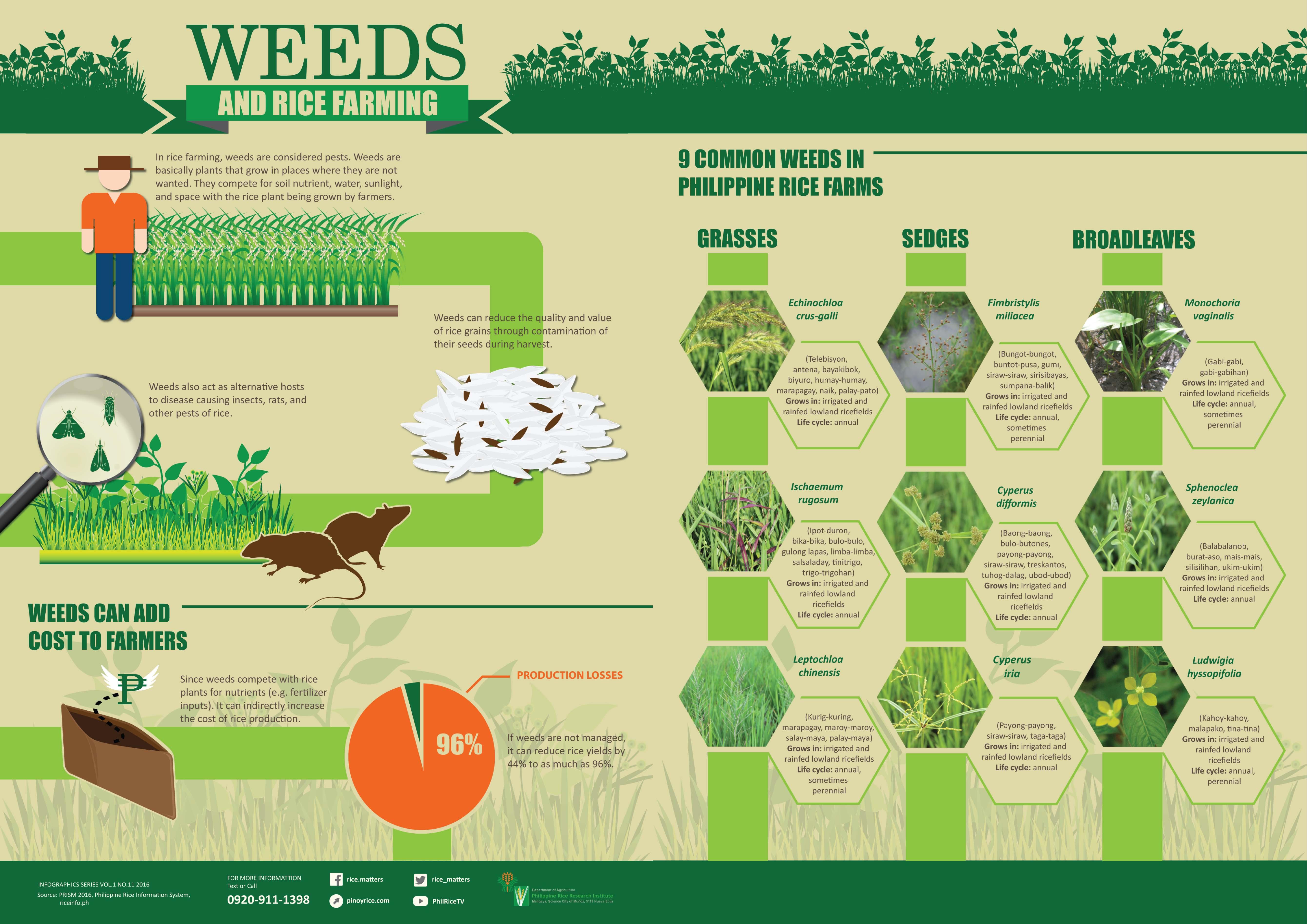 Weeds-Infographics_spread