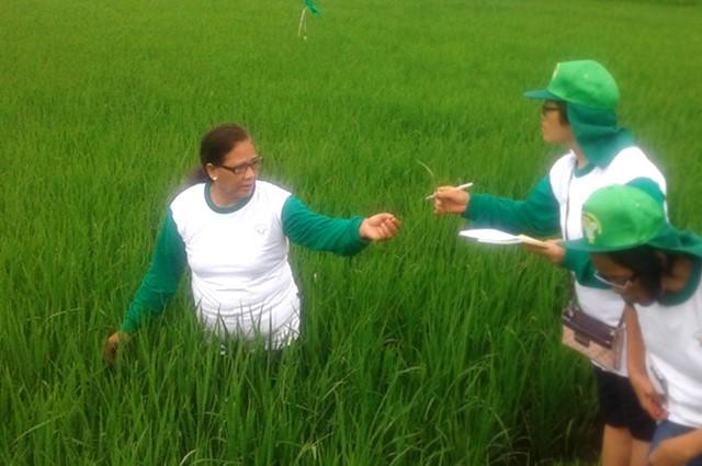 Rice achiever-Iloilo