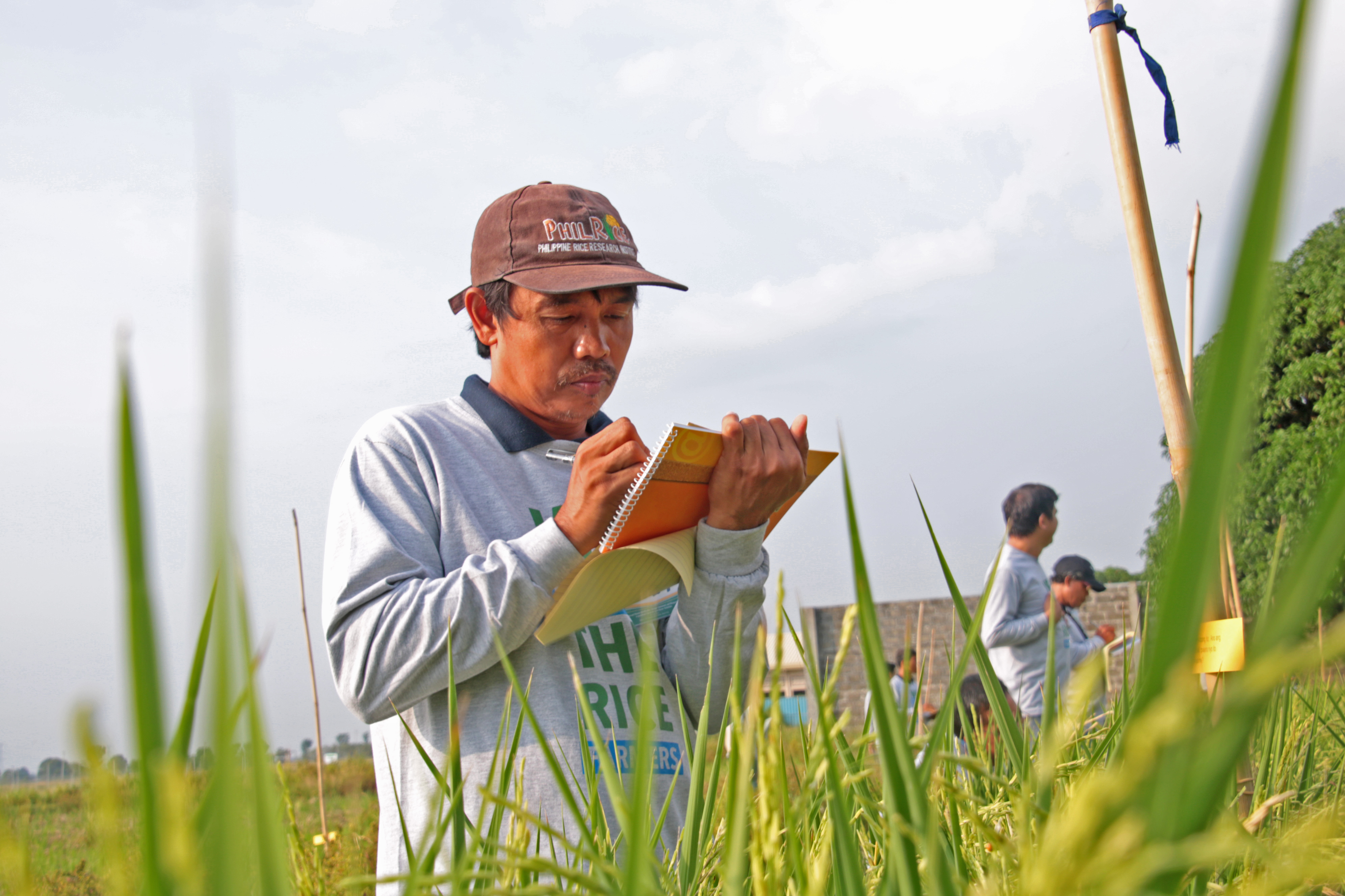 water saving rice production systems - HD3984×2656