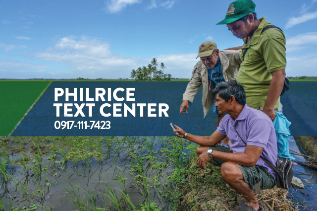 Farmers can now reach the PhilRice Text Center (PTC) through 0917-111-7423. The Text Center agents are available to answer queries about rice seeds and modern farming practices from Monday-Friday, 9 am-5pm.